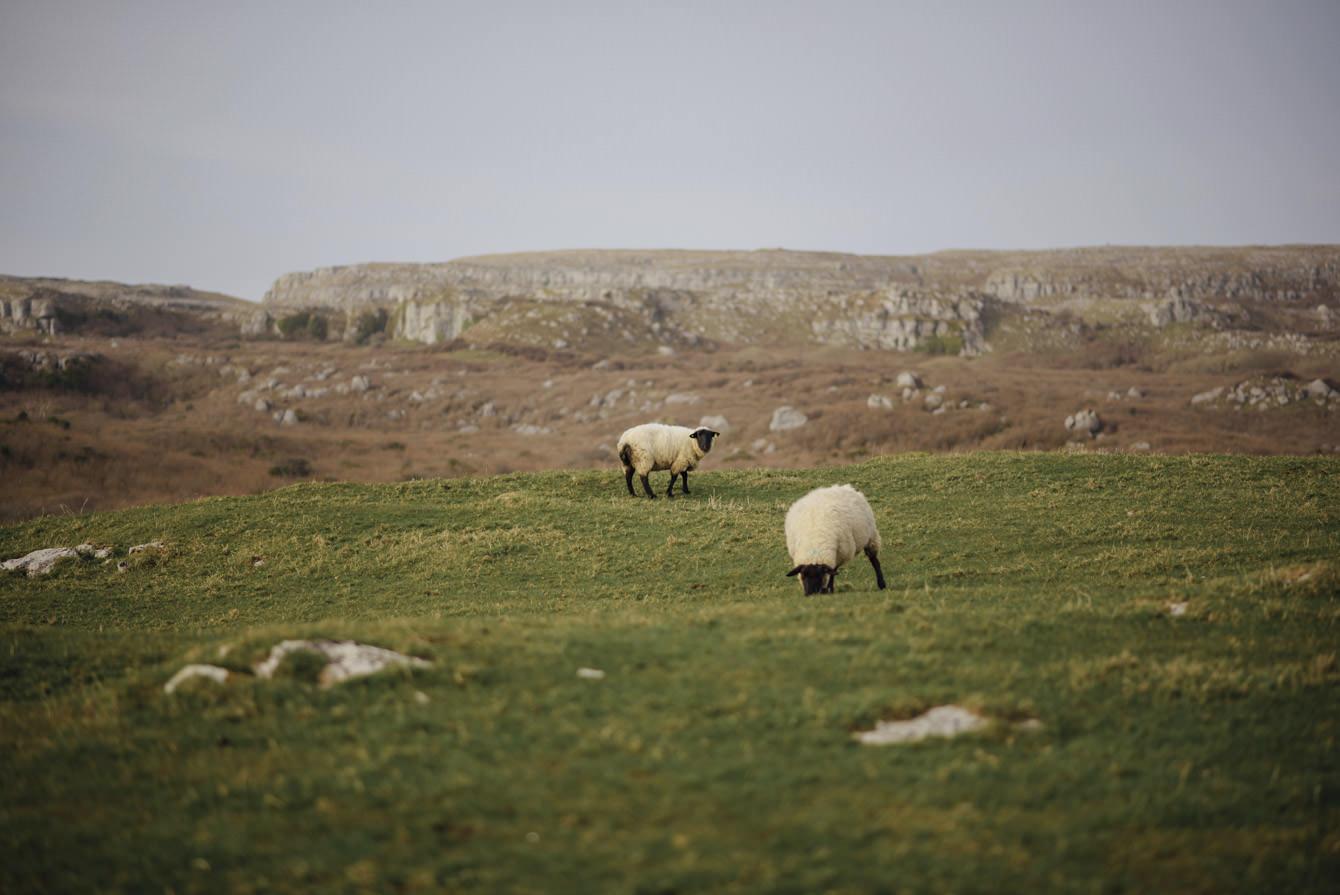 Elopement Ireland71